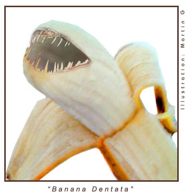 Banana_Dentata