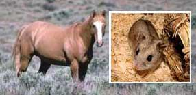 Hamster_Horse