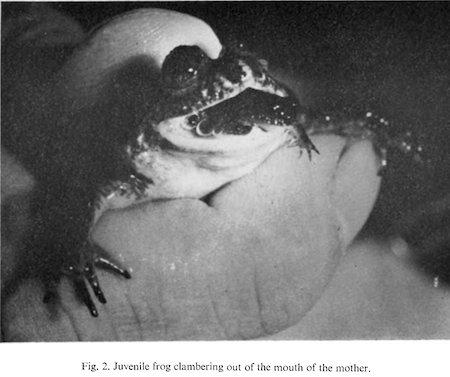 tyler-frog
