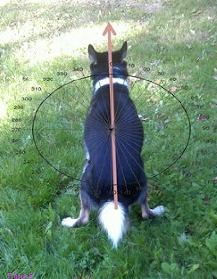 dog-depositing