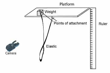 bungee-maths
